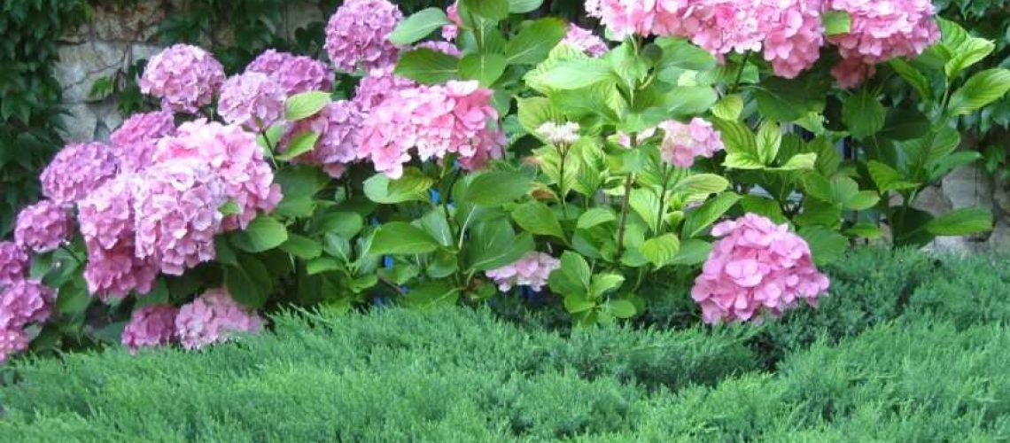 Virágzó-cserjék-1-848x480